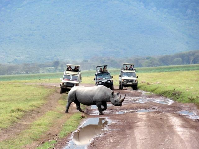 Rinoceronte en Ngorongoro - Tanzania