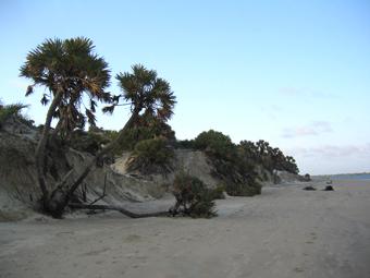 Playa de Lamu. Kenya. Septiembre de 2006