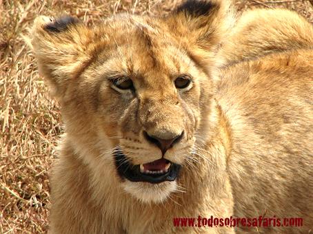 safari1-318
