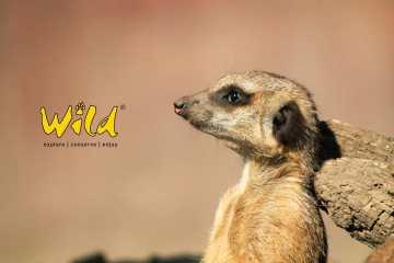 Wild Magazin Südafrika