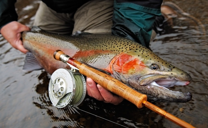 Selecting the Rod for Trout