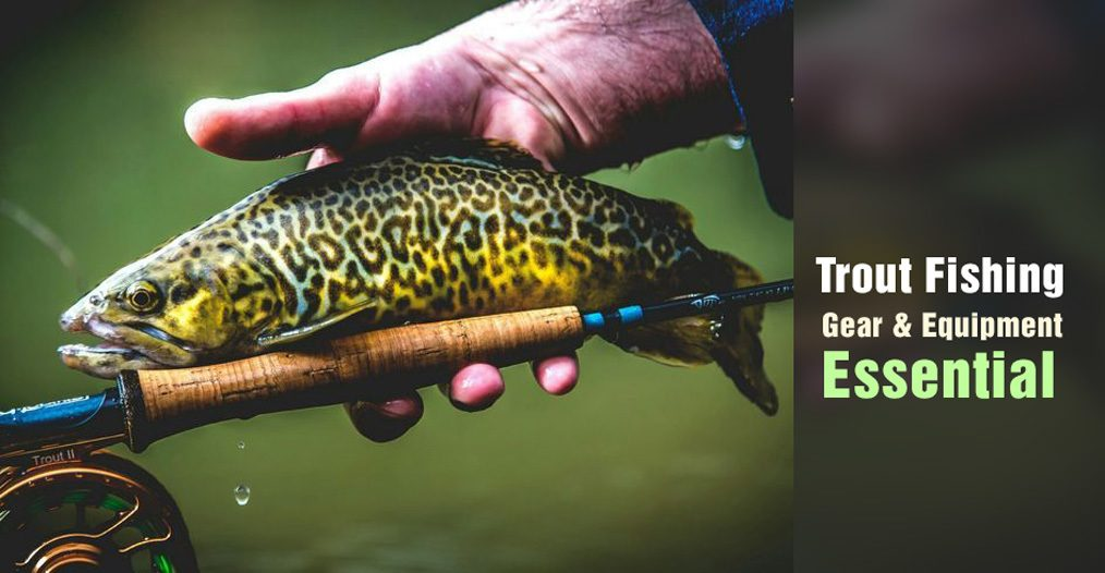 Trout Fishing Gear and Equipment Essential