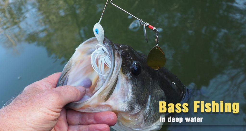How to Catch Bass in Deep Water