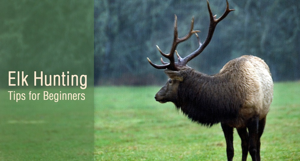 Best Elk Hunting Tips for Beginners