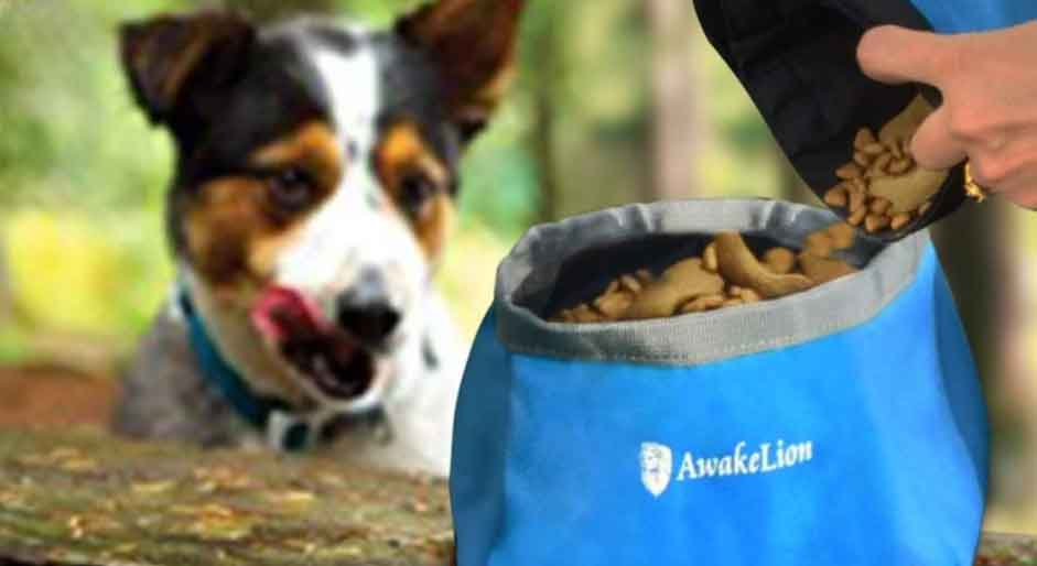 First-Aid Kit for Backpacking with Your Dog