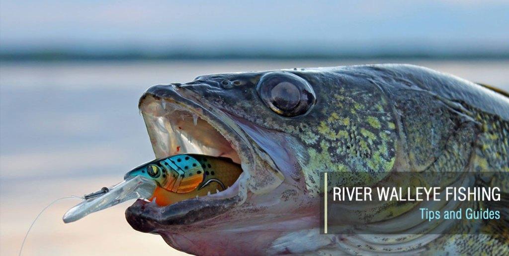 River Walleye Fishing