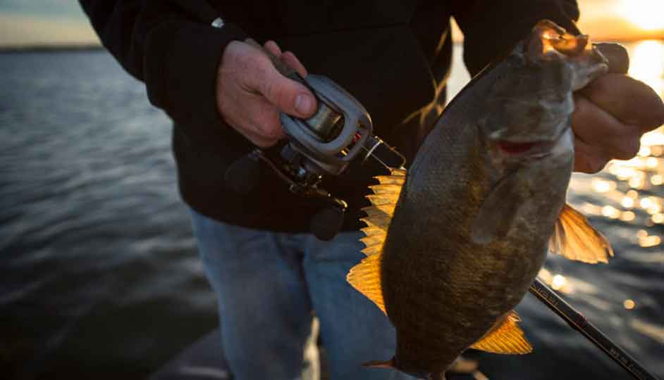 Find the Right Gear Ratio for Baitcasting