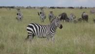 Lodge Safari Ngorongoro Serengeti