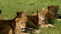 Safari to Selous-Mikumi