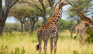 Safari Tarangire,Ngorongoro