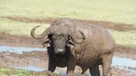 safari-tours-tarangire-serengeti-ngorongoro-manyara