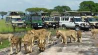 Budget Tanzania Safaris