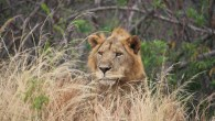 4 days lodge safari ngorongoro serengeti tarangire