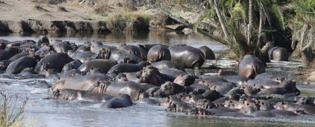 Tanzania Budget Holiday Safari