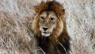 Serengeti Wanderung 4 Tagen Safari