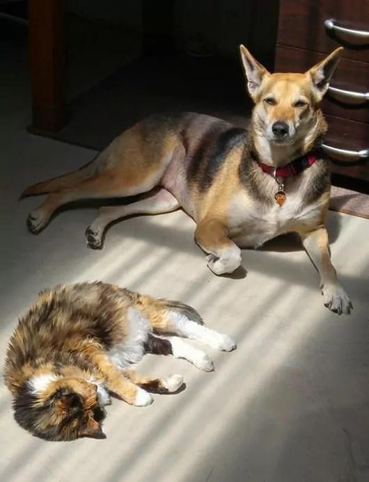 Shiloh and Tigger the cat
