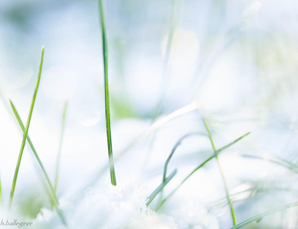 Schnee und Gras