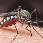 Keep bugs out of your house: mosquito feeding