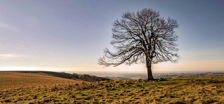 Know That Tree: How to Review and Identify Trees