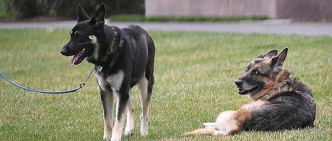 Joe Biden prend un chat à la Maison Blanche pour cohabiter avec ses chiens