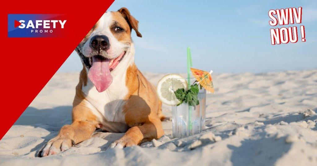 Nouvelle tendance: un bar à cocktails spécial pour les chiens