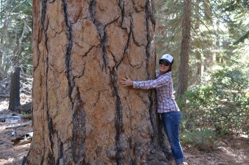 Christina hugs a big PIPO in Emerald Bay State Park