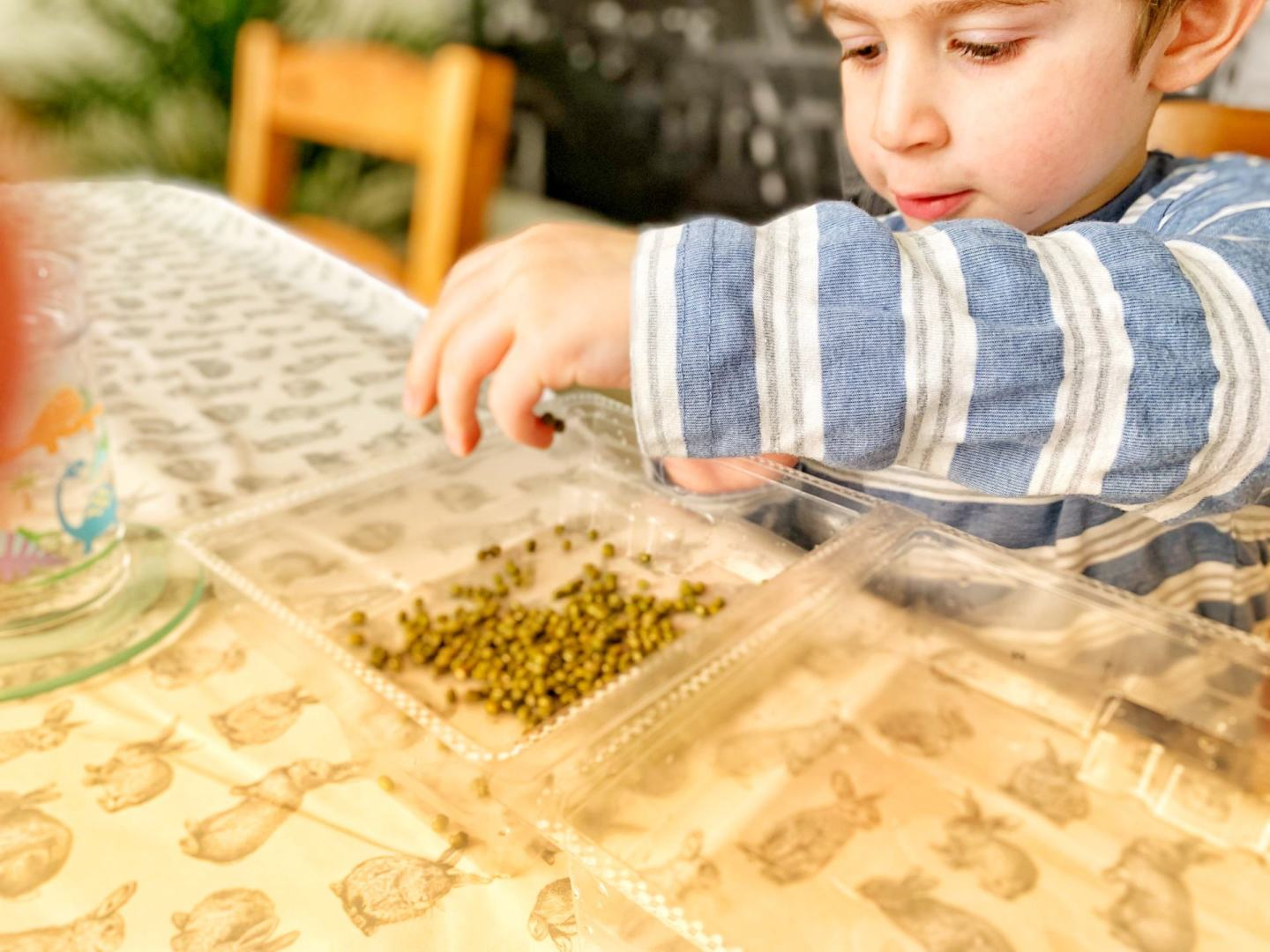 Toddler with mung beans for Persian New Year