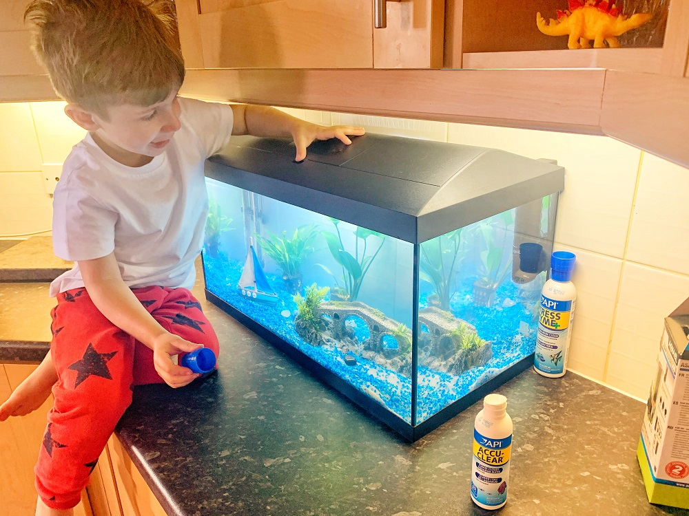 How to look after your first pet fish and an aquarium