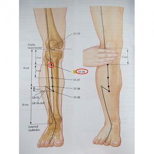 Zu San Li - Anatomie
