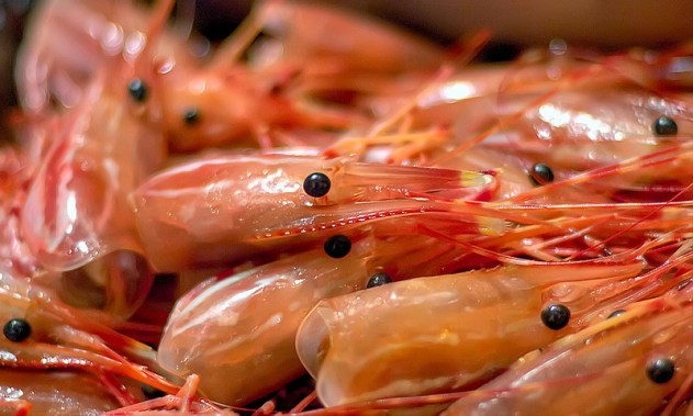 Why You Should Save Your Shrimp Shells - safimex.com 1