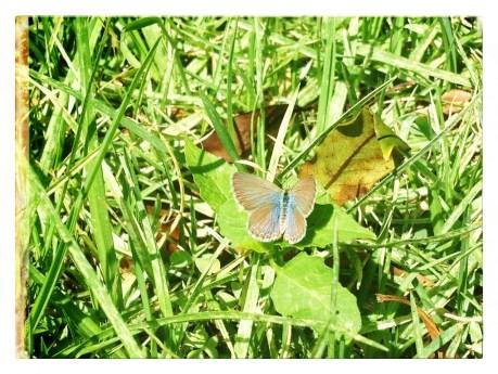 still fluttering