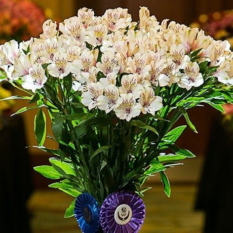 Best in Class: Alstroemeria 'Himalaya' Flores Funza