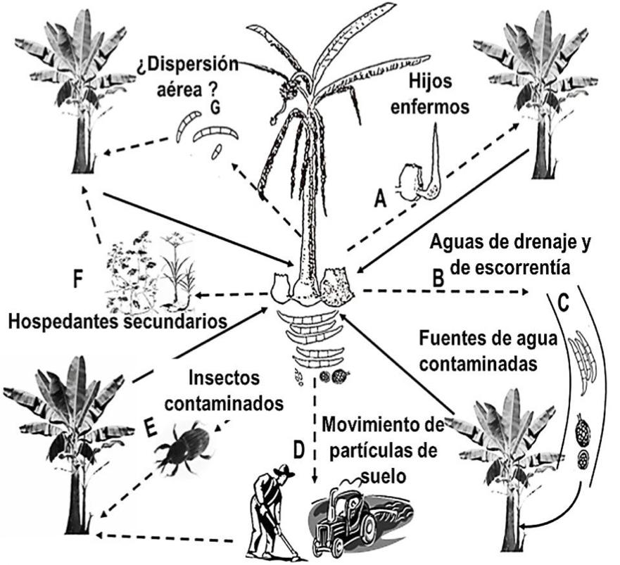 a) material de plantación;  b) escorrentía y sistemas fluviales;  c) partículas de suelo arrastradas y adheridas en zapatos, herramientas, equipos y todo lo que mueva suelo.