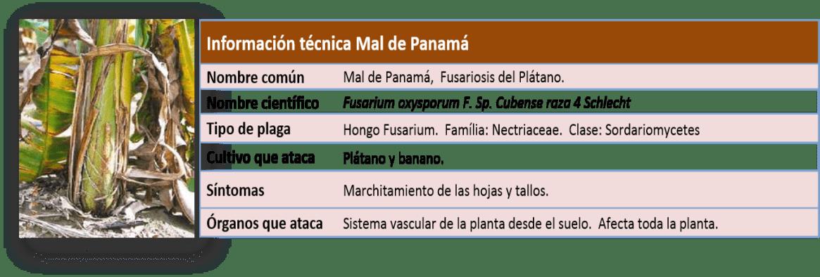 Ficha-Tecnica-Mal-Panama