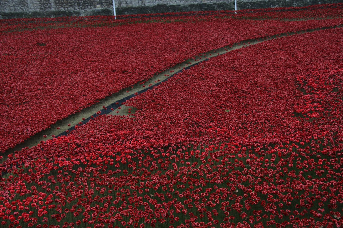remembrance-day-poppies-2