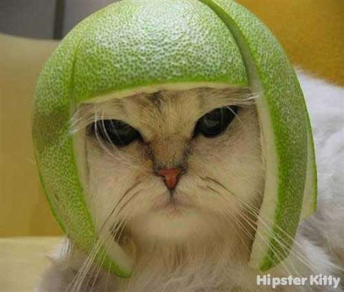 melon_hat_cat.dgql204urz4kk4s0g8kkgo444.f469i2i529kw48480kggcc000.th