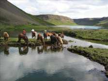 Horses having a drink