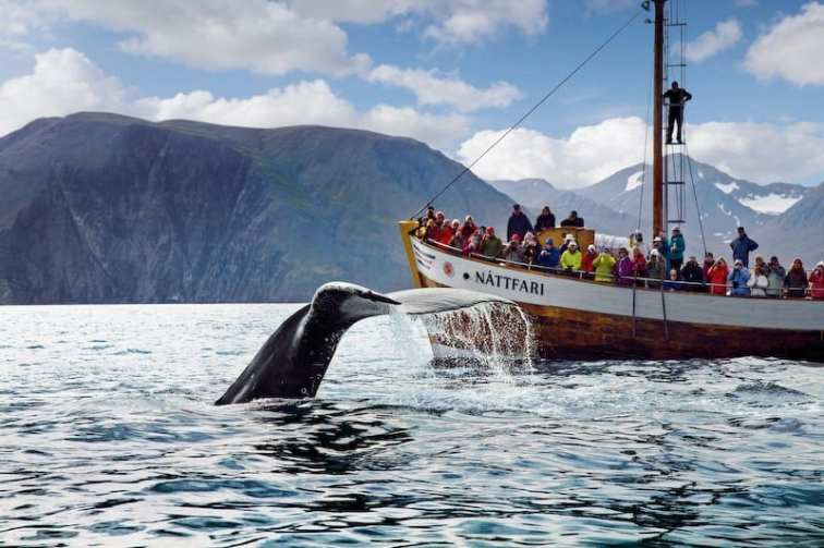 Húsavík is the Whale Watching capital of the World