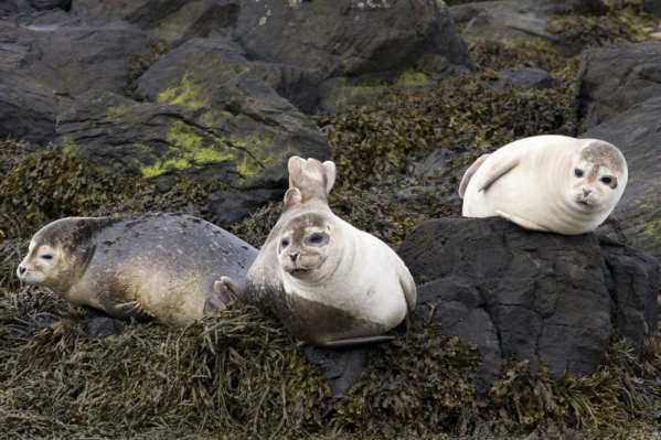 beautiful-seals-in-north-iceland