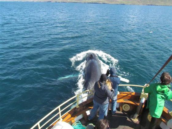 Hauganes Whale Watching