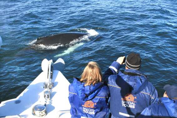 Special Tours Whale Watching