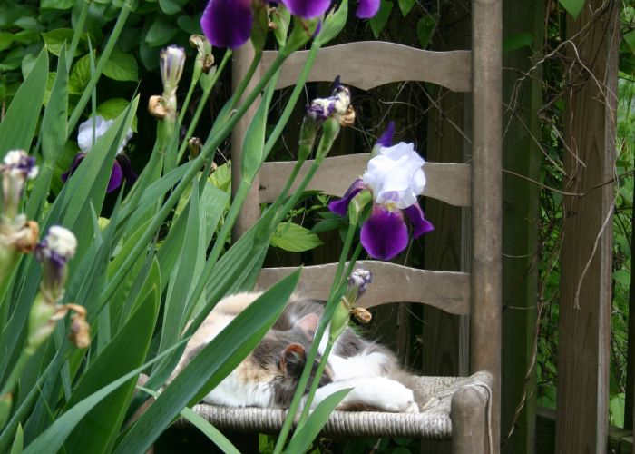 Chloe in the Garden