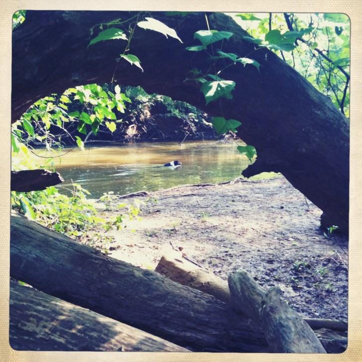 Eva Swimming Down the River