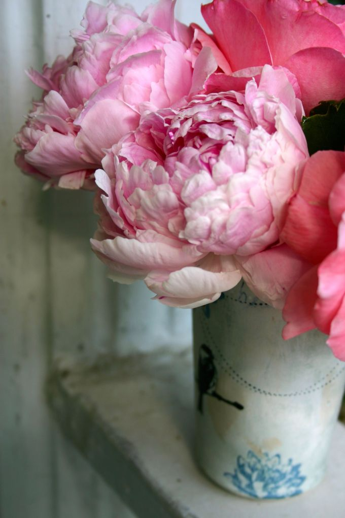 Pink Peonies and Rose - 8451