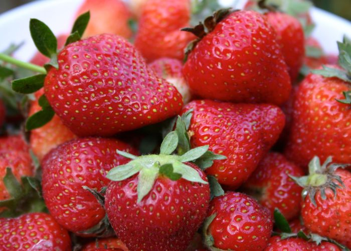 Mother's Day Harvest: Strawberries