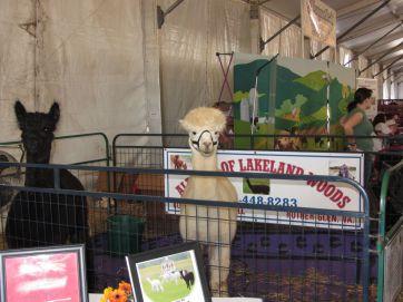 State Fair 2011 - 10