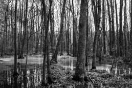 the wetlands (3 of 21)