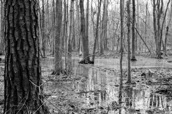 the wetlands (7 of 21)