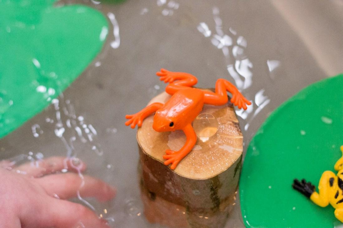 Frog and Tadpole Sensory Bin