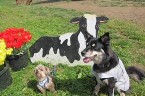 I was glad that cow wasn't real!